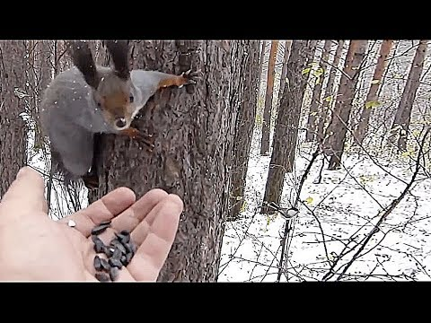 Birds and squirrels eat in a hand in a forest in winter...
