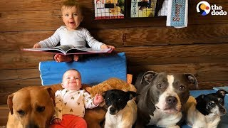 Furry Siblings Help Family Raise Two Babies | The Dodo by The Dodo