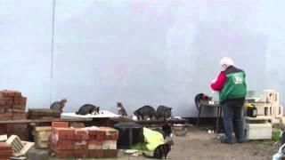 Betreute Futterstelle Tierschutzverein Mölln