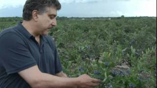 Meet ShopRite's Blueberry Farmer!