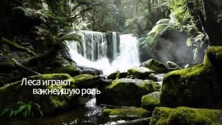 Международный день лесов – 2016 год