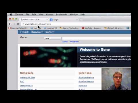 Vergleichung DNA-Sequenzen