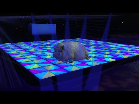 SKINNY CUNTED - THE DANCE OF THE FATTEST PIG