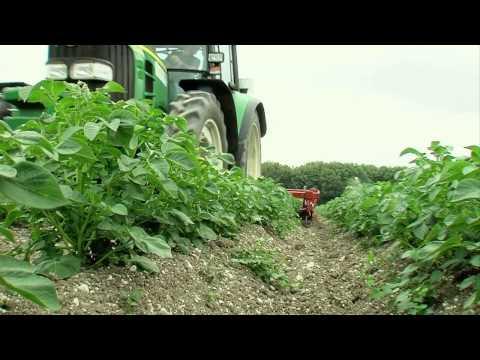 Le désherbage mécanique ou alternatif de la pomme de terre - Episode n°4
