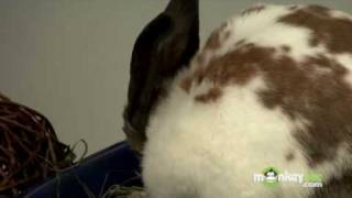How to Care for Your Rabbit