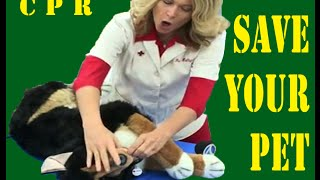 How To Save Your Dog: CPR Steps For Pets And Animals