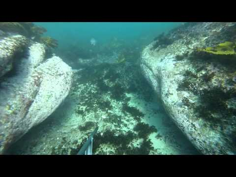 Spearfishing in Coogee Aug 2014