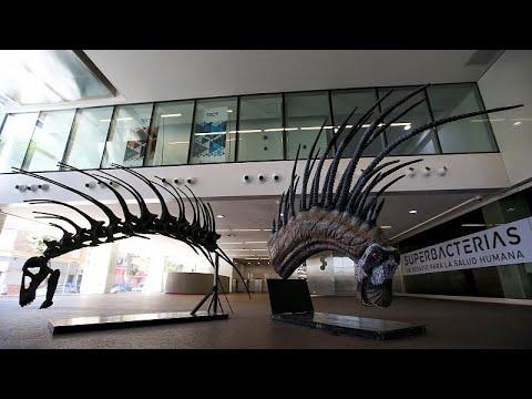 Γνωρίστε τον εντυπωσιακό Μπαχαδάσαυρο Σπινόσαυρο!