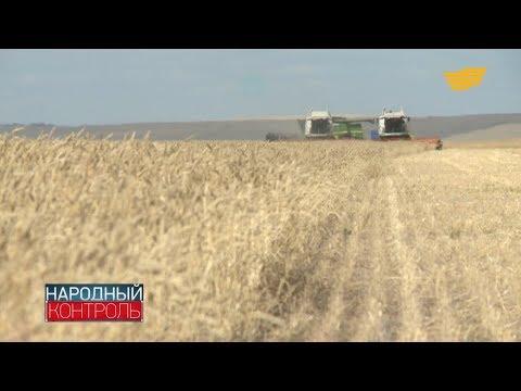 Из-за дождей уборка зерна в Карагандинской области отстает от графика