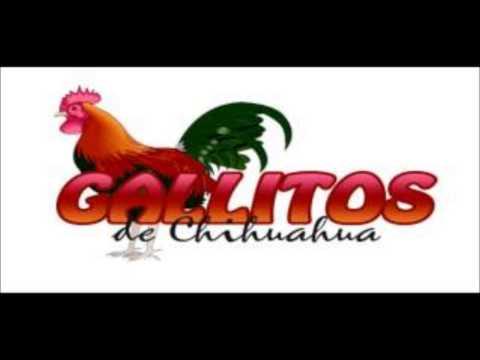 los gallitos de chihuahua – abrazado de un poste.2014