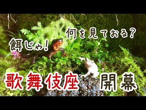 日本アクアテラリウム【経過報告&エサやり】
