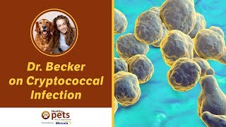 Dr. Becker on Cryptococcal Infection