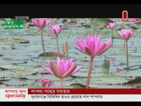 Flowers in water colour the (19-10-2019) Courtesy: Independent TV