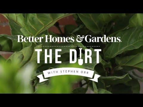 , title : 'Decorating with Houseplants | The Dirt | Better Homes & Gardens'