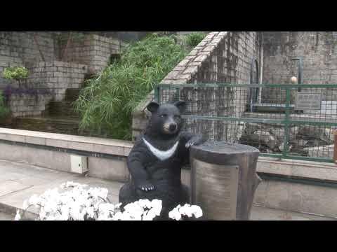 35歲黑熊BoBo離世