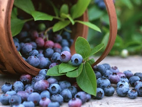 Bilberries | Anthocyanins, Antioxidant, Cardiovascular Disease, Inflammation, Age Induced Oxidative