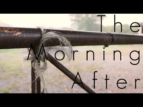 The Morning After - Short Film