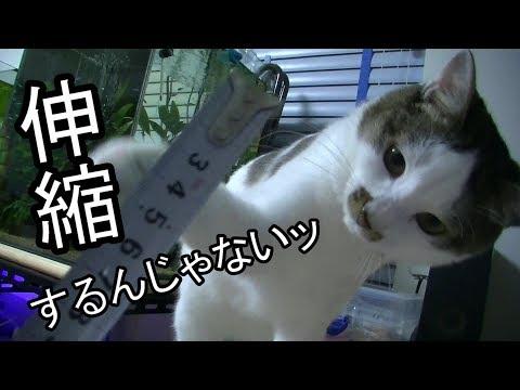 猫にメジャーを見せたら何故かドン引きされた