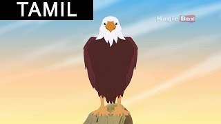 Aesop Fables In Tamil - Story 13 The Eagle and the Turtle - Aesop Fables (Animated Stories) (Tamil)