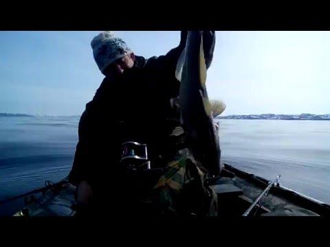 рыбалка во  териберке 2016 нате треску
