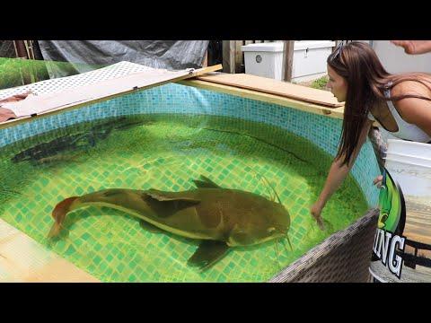 Girl Feeds MASSIVE Aquarium Fish In My MEGA Pond!!
