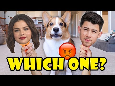 Why Does My CORGI Dislike Selena Gomez & Nick Jonas? || Life After College: Ep. 634