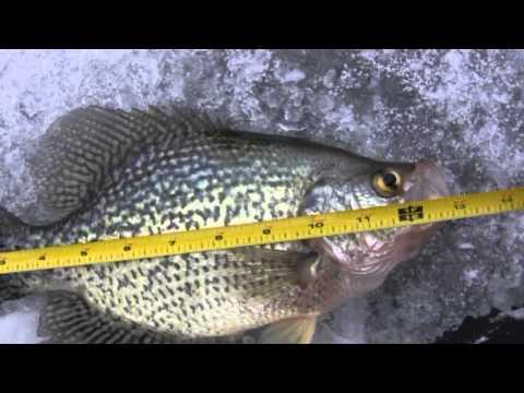 Ice Fishing Crappies Feb 2013