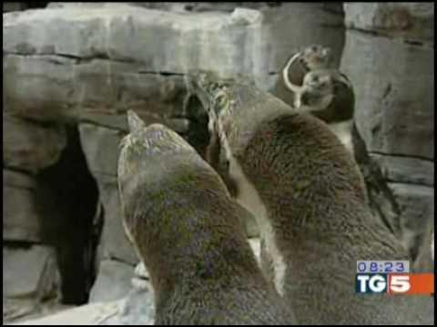 l'incredibile storia dei due pinguini gay che adottarono un cucciolo