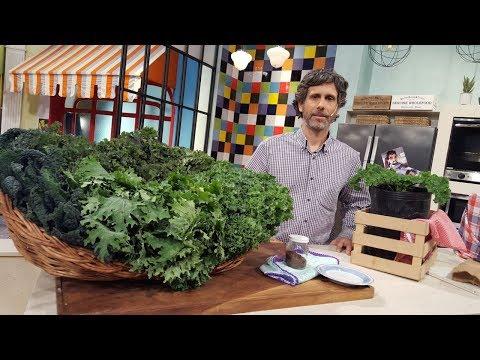Todo sobre el kale, conocelo y usalo