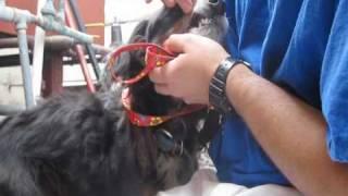 Marley - rescued from the Hollywood Hills by Eldad Hagar