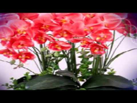 Поливая так, орхидея зацветет за 10 дней #mosshow