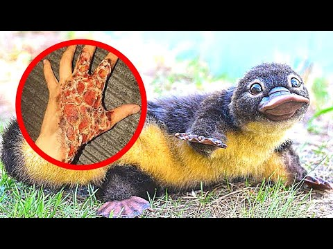10 CUTEST Animals You Should NEVER Touch