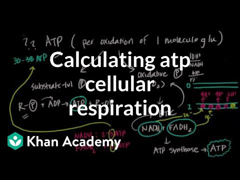 Calculating Atp Produced In Cellular Respiration Video Khan Academy