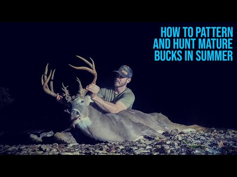 How to Pattern and Hunt Mature Bucks in Late Summer