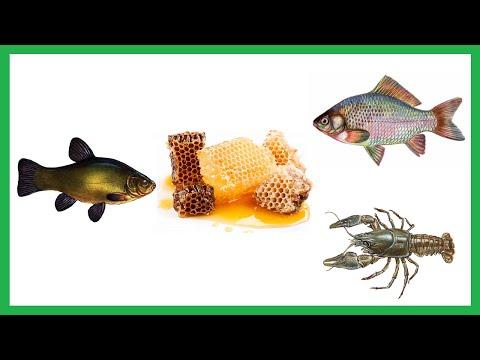 лучшие насадки для ловли белой рыбы