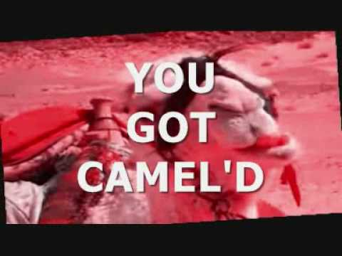 YOU GOT CAMEL'D 3 0
