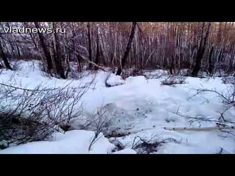 Охотники разбудили и убили двух косолапых