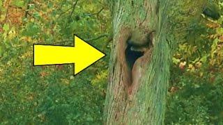 سمعوا صراخ يأتي من هذه الشجرة !! أنظر ماذا وجدوا في داخلها ؟