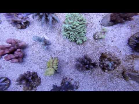 Eternalaquarium S Eternal Reef