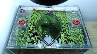 Ep.6 Sweet Potato Betta Tank (NEW Plants & Favorite Kartoffel Food) No filter, No CO2, NO ferts Nano