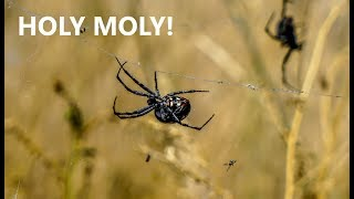 SALT LAKE SPIDERS - YIKES!!Spend the day with us in Midvale, Utah and visit Salt Lake. Thanks for following us on our journey. We love having you along :)Ric & Melody believe in LIVING FREE FOREVER. We aim for a minimalist & simple lifestyle, so we can feel free to do what matters most to us...spending time with our family, traveling & just enjoying life.  We hope to inspire others to follow their dreams and goals as well.Subscribe To Noah's Channel: TikTakFrog https://www.youtube.com/channel/UCj26xbO4QyY_05K4W3vDbcQNoah's Instagram: https://www.instagram.com/tiktakfrog/ Willow's Instragram: https://www.instagram.com/ruthberry207/Thank you for supporting our channel by shopping on our Amazon affiliate store http://amzn.to/1ZNfFjv   *****************************************LOVE this credit card for travel! Earn 50,000 bonus points with Chase Sapphire Preferred.  Learn more. https://applynow.chase.com/FlexAppWeb/renderApp.do?SPID=FNLC&CELL=63HD&MSC=1543018559 #ad*****************************************************************LEARN ANYTIME ANYWHERE - FREE 30 Day Trial! http://www.tkqlhce.com/click-8093518-12177384*Learn new business, creative, & tech skills with expert-led online video tutorials************************************************************AWESOME Travel Sites!$40 off your 1st trip stay! Travel with Airbnb 1 million+ places to stay around the world or rent your home & earn http://www.airbnb.com/c/melodys449  Home Stay - Great Value In Over 150 Countries!http://www.jdoqocy.com/click-8093518-12353257FREE Flight Comparison With Skyscanner http://www.kqzyfj.com/click-8093518-12532519  Find Yelp Deals In Your Area http://www.anrdoezrs.net/click-8093518-10867459  WORLD NOMADS TRAVEL INSURANCE Click here to get a free quote http://goo.gl/W055p1   Join AAA auto travel club to save on travel! http://autoclubsouth.aaa.com/refer/?ref=3007956552  I've been a member for over 33 years! EURail Select Pass http://www.dpbolvw.net/click-8093518-11726308 ******************