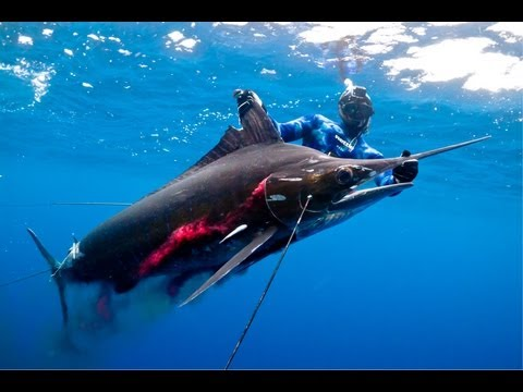 new world record! underwater fishing