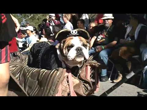 0 Halloween Dog Parade