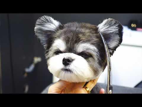 (슈앤트리) 강아지 반려견 가위컷 스포팅 미용 / pet dog grooming - Thời lượng: 105 giây.