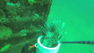 Panama City Beach Lionfish killing