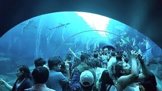 Video FULL TOUR of SEA Aquarium Singapore @ Resorts World Sentosa MP3, 3GP, MP4, WEBM, AVI, FLV Juni 2019
