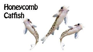 Daily(ish) Dose- 55 Gallon Aquarium by Rachel O'Leary