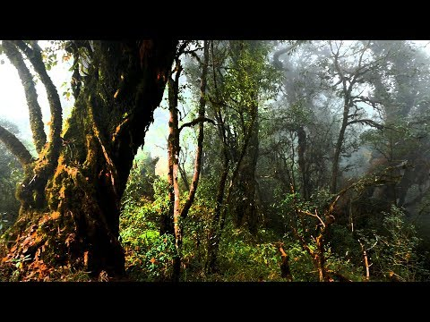 The Deep Dark And Dense Forest Of India || Arunachal Pradesh || Bompu Camp