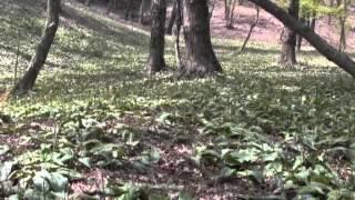 可児川下流域自然公園・カタクリ群生地探訪