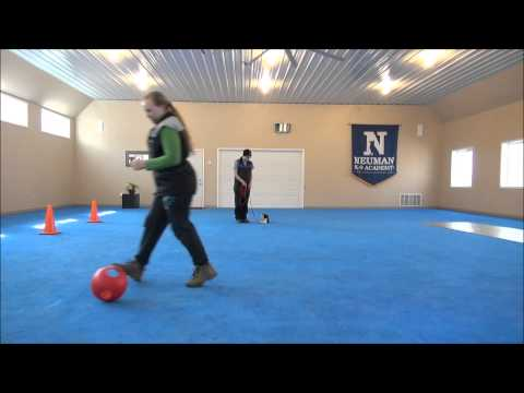 Cooper (Havanese) Puppy Camp Training Video